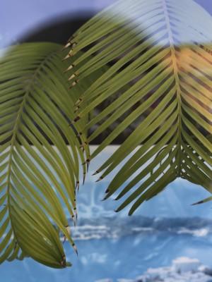 Palmenzweige an einer Scheibe