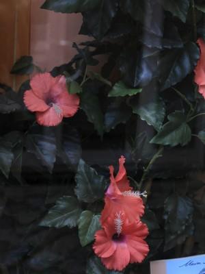 Zimmerpflanzen an Glasscheibe