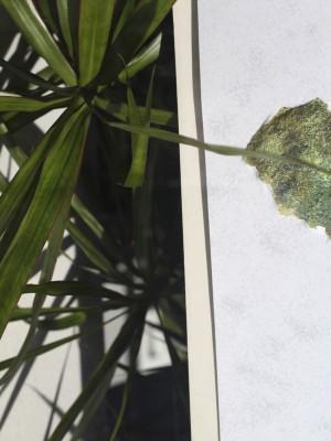 Blätter und Formen