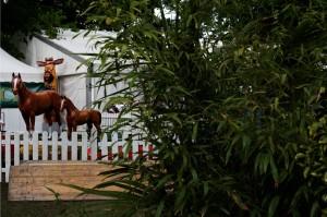 Pferde beim Deutschen Spring- und Dressur-Derby in Hamburg Klein Flottbek