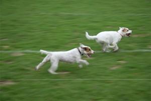 Hunderennen beim British Flair im Hamburger Polo Club