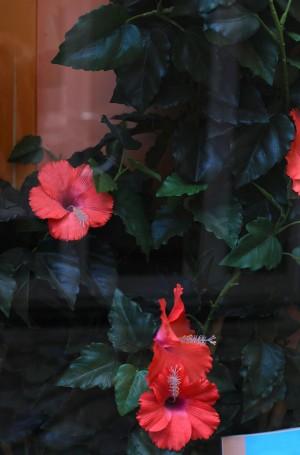 Blumen hinter einem Schaufenster