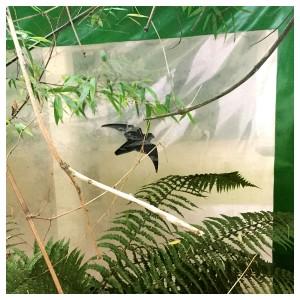 Baustellenschutzfolie mit einem aufgedruckten Vogelmotiv zum Schutz der Vögel, Naturschutzgebiet Wittenbergen